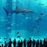 vivre-enfants-akvarium