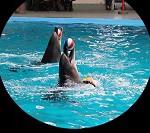 vivre-enfant-dauphin